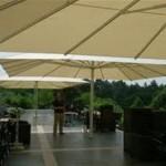 parasol2 (Large)